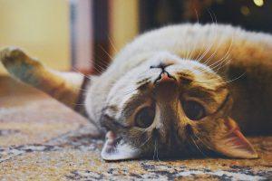 pet liability insurance